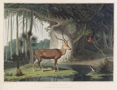 Samuel Daniell (1775-1811)