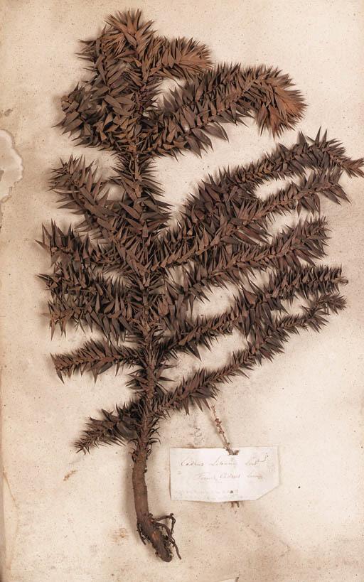 Belgium, Botanical Albums
