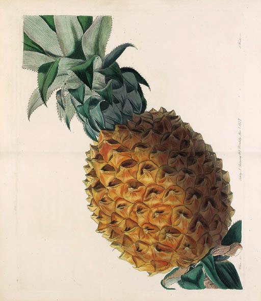 Lindley, John (1799-1865). Pom