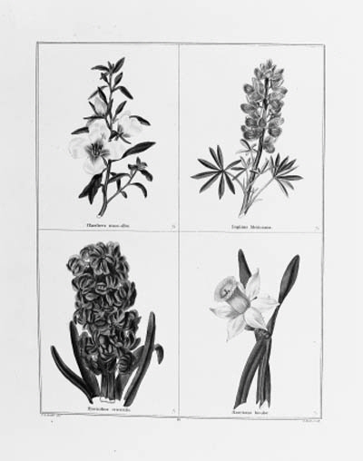 MAUND, Benjamin.  The Botanic