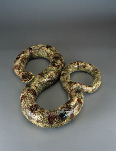 A large Palissy type model of a snake
