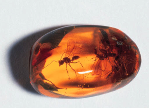 A group of amber specimens,
