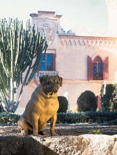 Modelo de perro pequeo de raza