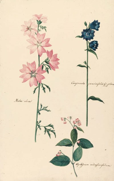 Johann Jacob Luttringshausen (