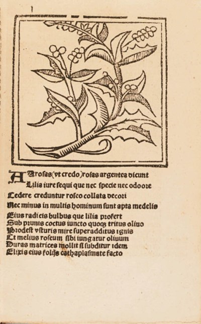 Floridus Macer, attributed to
