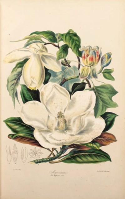 Elizabeth Twining (1805-1889)