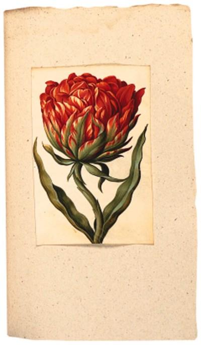 Tulip Album