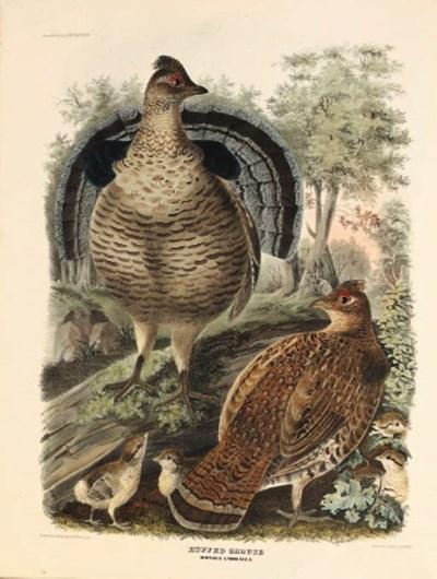 Daniel Giraud Elliot (1835-191