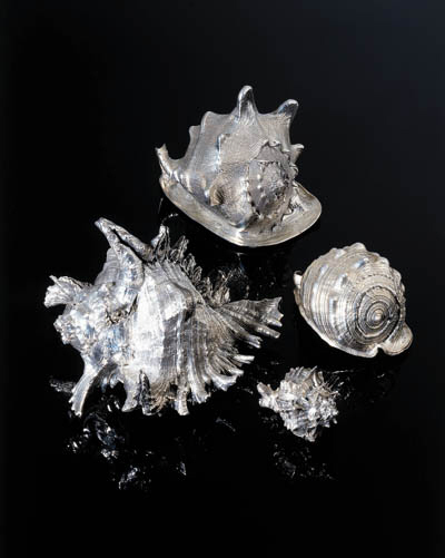 A Group Of Shells, By Mario Bu