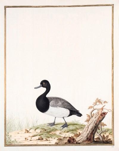 Nicolas ROBERT (1614-1685) or