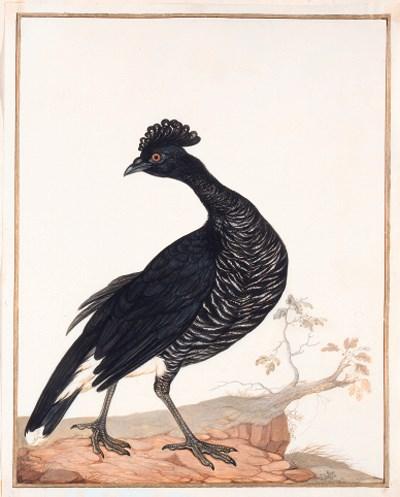 Claude AUBRIET (circa 1665-174