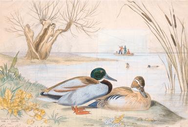 Edouard TRAVIES (1809-circa 18