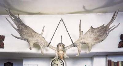 A pair of Irish elk antlers