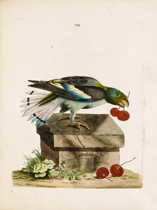 BROWN, Peter.  New Illustratio