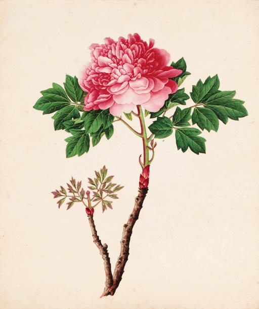 A set of six Chinese botanical