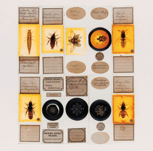 A 19th-Century mahogany microscope slide box,