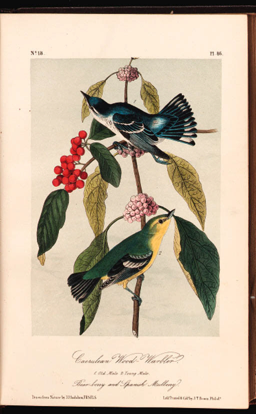 AUDUBON, John James (1785-1851). The Birds of America, from Drawings made in the United States and their Territories. New York: J.J. Audubon; Philadelphia: J.B. Chevalier, [1839] 1840-1844. 7 volumes, royal 8so (260 x 165 mm). 500 hand-colored lithographed plates after Audubon by W.E. Hitchcock, R. Trembly and others, printed and colored by J.T. Bowen, wood-engraved anatomical diagrams in text, subscribers list in all volumes (very occasional and minor offsetting through original tissue guards, extreme edges of leaves occasionally darkened, small blank marginal loss to text leaf 26/2 in volume IV). Contemporary half purple hard-grained morocco (spine on volume VII detached but present, front hinge of volume V cracked, others with wear at extremities). FIRST OCTAVO EDITION. Provenance: John Chipman Gray, signature at front of volumes I, IV and VI (bookplates). J.C. Gray is noted as an original Boston subscriber in volume I. Ayer/Zimmer p.22; Bennett p.5; McGill/Wood p.208;