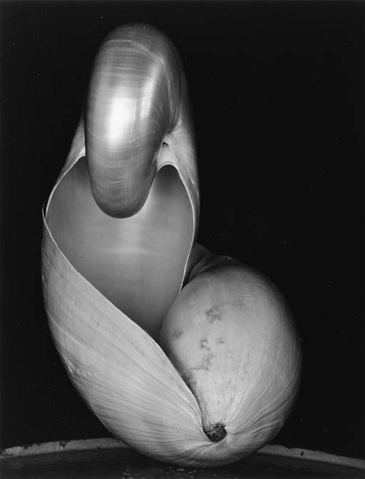 EDWARD WESTON  COLE WESTON