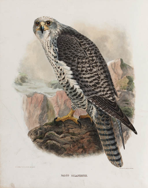 ELLIOT, Daniel Giraud. The New and Heretofore Unfigured Species of the Birds of North America. New York: by the author, [1866]-1869.