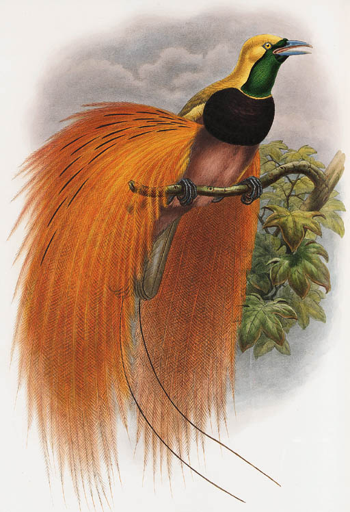 "SHARPE, Richard Bowdler. Monograph of the Paradiseidae, or Birds of Paradise...London, 1891-1898. 2 vols. 2o. (550 x 375 mm.) 79 fine hand-colored lithographs after and by Gould, Hart and Keulemans, with numerous illustrations in text (each plate ink-stamped either just below the artist or the imprint in the bottom margin, perforated stamps on contents page of each vol.), colours very fresh and bright. Contemporary Riviere binding of natural morocco with gilt-tooled red morocco onlay borders on sides, spine gilt-tooled with whorls, red morocco lettering pieces, edges gilt. FIRST EDITION, of ""The last of the fine bird books"" (Fine Bird Books). Ayer/Zimmer 581; Fine Bird Books 107; Nissen, IVB 865; Nissen, SVB 457. Provenance: F. Monteith Ogilivie bookplate. 	 (2)"