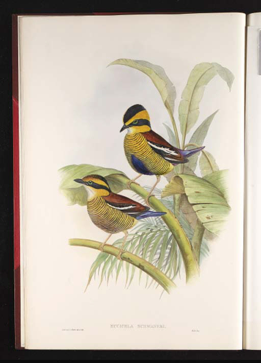 GOULD, John. Monograph of the