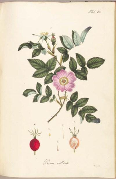 KREBS, F.L. (fl. 1827-1835). V
