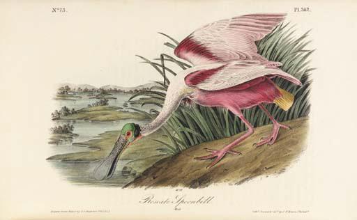 AUDUBON, John James. The Birds