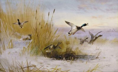 Archibald Thorburn (1860-1953)