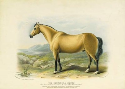 David Low (1786-1859)