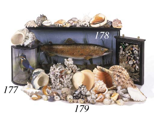 A quantity of various seashell