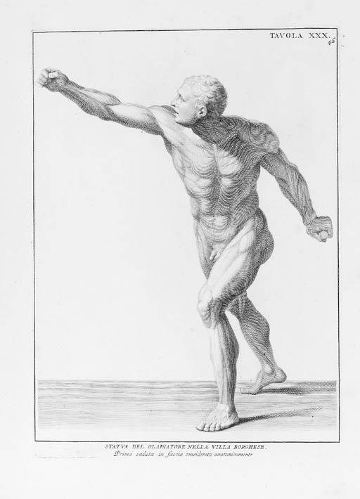 GENGA,  Bernardino.  Anatomia