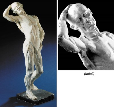Ecorche anatomical figure of t