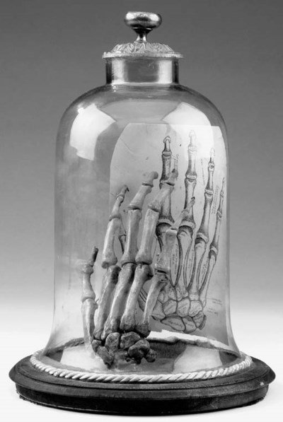 A skeleton of the human hand e