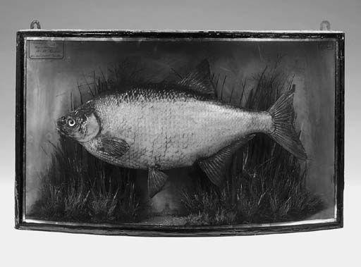 A Victorian stuffed and cased fish, late 19th century