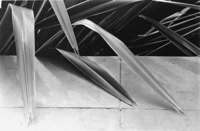 ALICE STEINHARDT (BORN 1950)