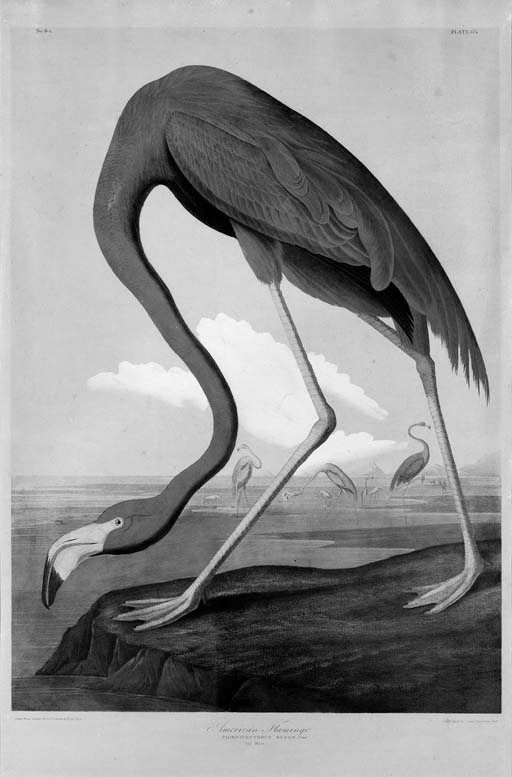 After JOHN JAMES AUDUBON, by J