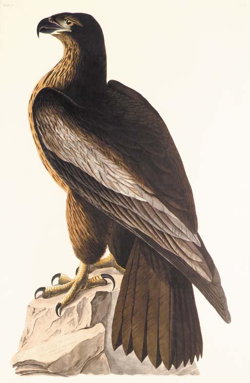 THE BIRD OF WASHINGTON, OR GRE
