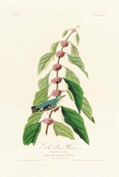 BLUE-GREEN WARBLER (PLATE 49)