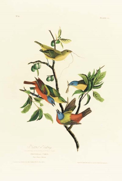 PAINTED BUNTING (PLATE 53)