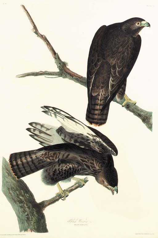 BLACK WARRIOR (PLATE 86)