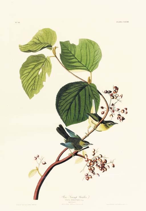 PINE SWAMP WARBLER (PLATE CXLVIII)