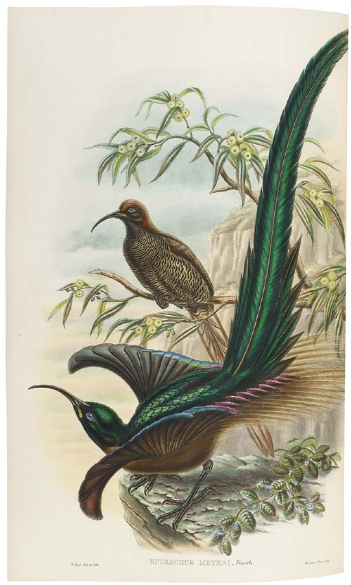 SHARPE, Richard Bowdler (1847-1909). Monograph of the Paradiseidae, or Birds of Paradise, and Ptilonorhynchidae, or Bower-Birds. London: Henry Sotheran & Co. [printed by Taylor and Francis], 1891-1898.