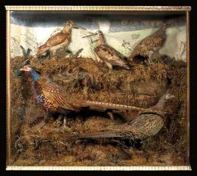 A CASED GROUP OF GAME-BIRDS
