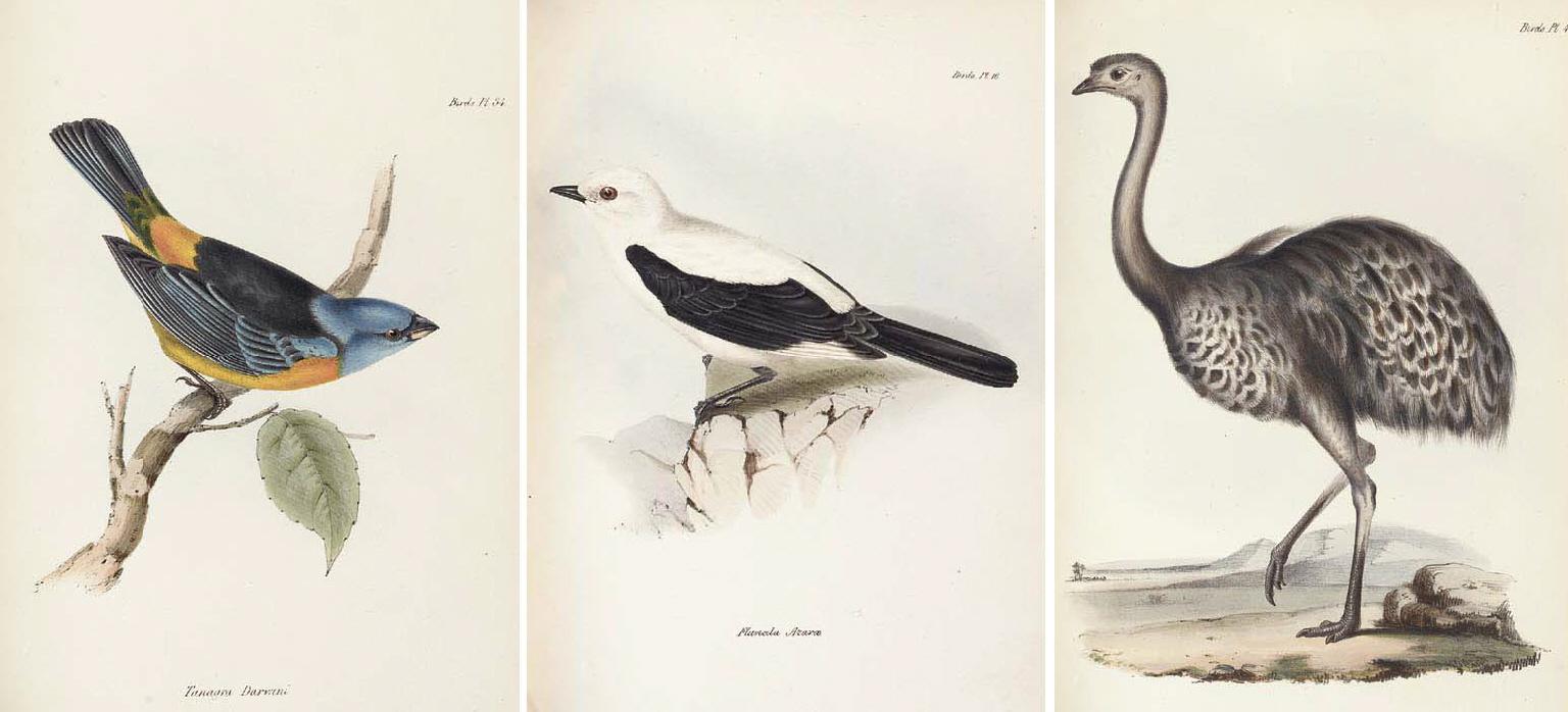 CHARLES ROBERT DARWIN (1809-18