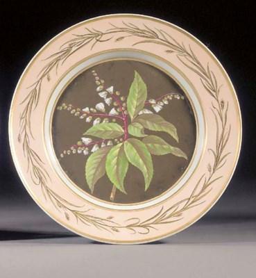 A Berlin botanical plate