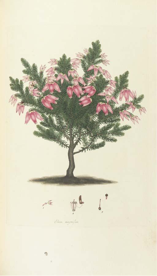 ANDREWS, Henry C. (fl. 1794-18