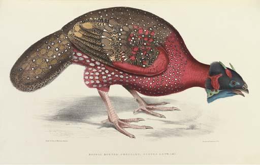 GRAY, John Edward (1800-1875).