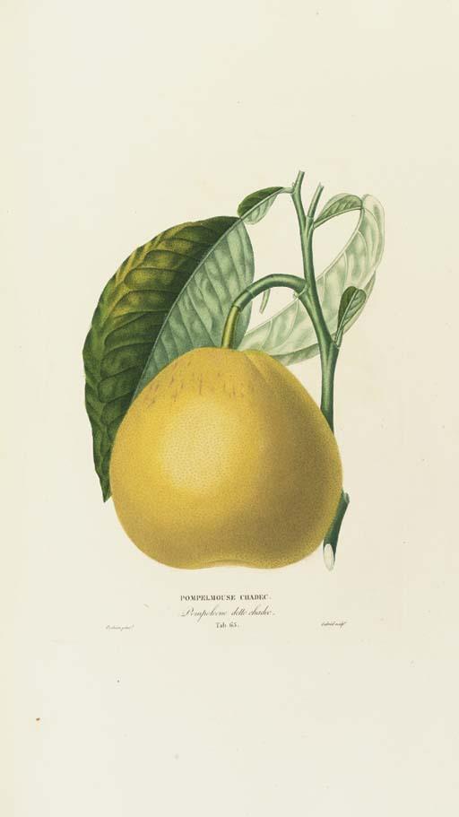 RISSO, Joseph Antoine (1777-18