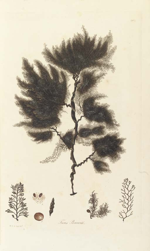 TURNER, Dawson (1775-1858). Fuci, sive plantarum fucorum generi a botanicis ascriptarum icones descriptiones et historia... Fuci; or, coloured figures and descriptions of the plants referred by botanists to the genus Fucus. London: J. M'creery for John and Arthur Arch, 1808-1819.