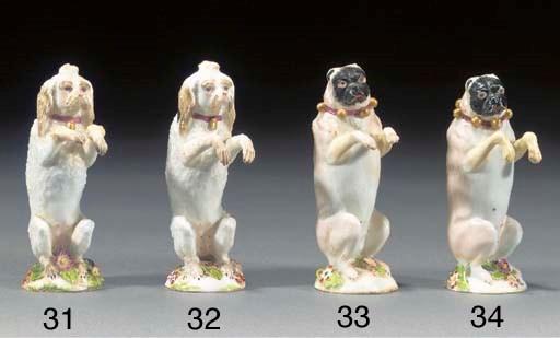 A Chelsea model of begging pug
